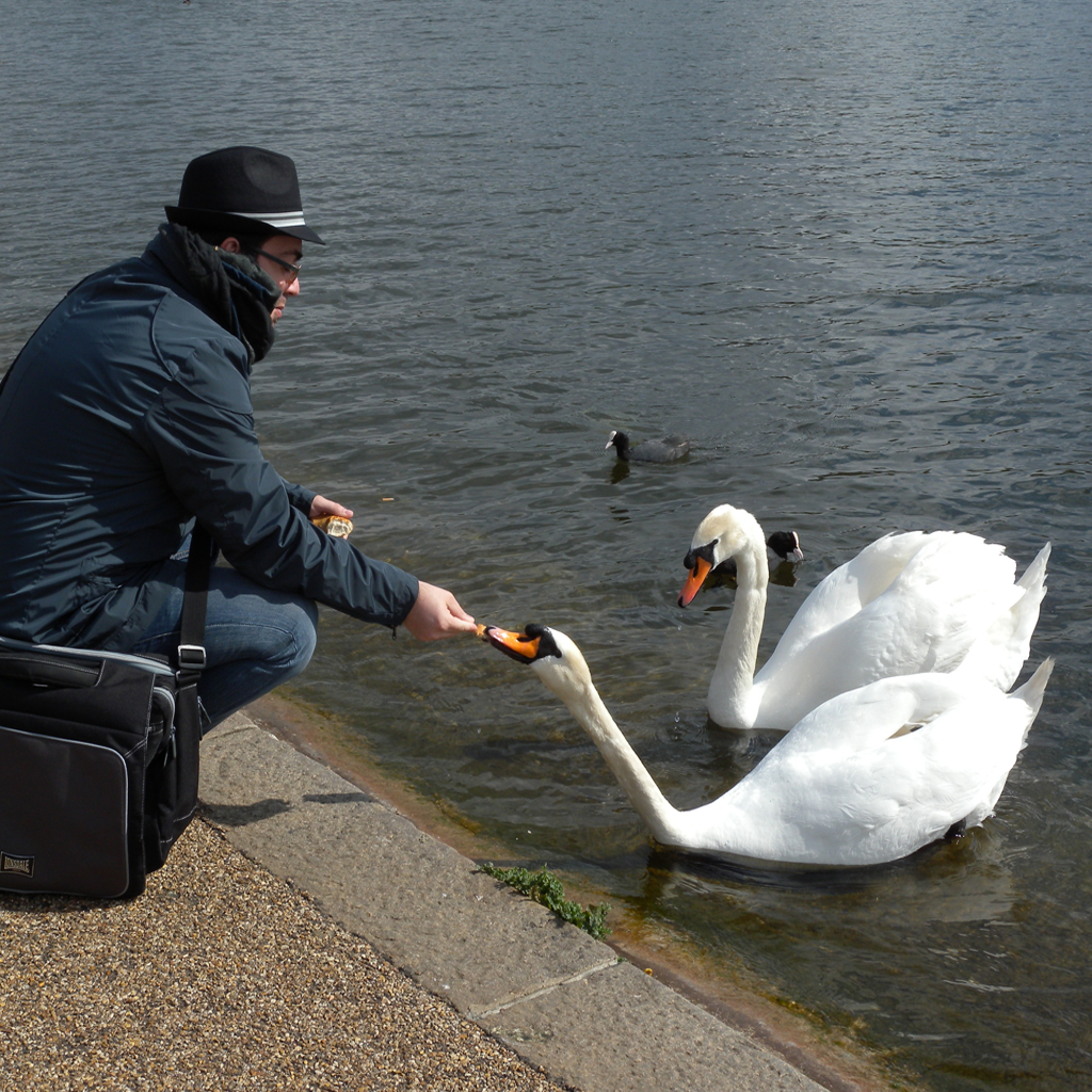 can-you-feed-a-swan-when-you-see-them