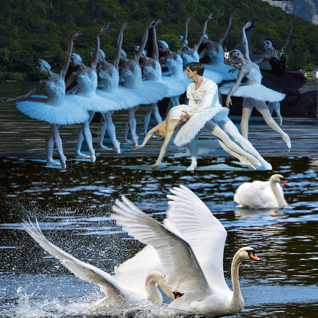 what-is-the-swan-lake-all-about